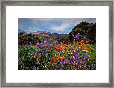 Nature's Bouquet  Framed Print