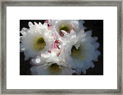 Natures Bouquet Framed Print