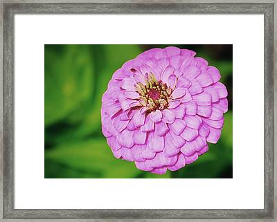 Nature's Boutonniere Framed Print by JAMART Photography