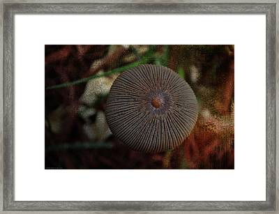 Nature's Button Framed Print