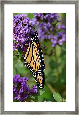 Nature's Color Match Framed Print