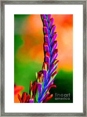 Nature's Colors Framed Print by Tap On Photo