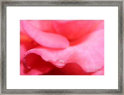Nature's Cradle Framed Print