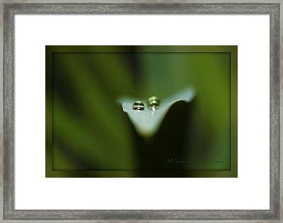 Framed Print featuring the photograph Natures Creation by Michaela Preston