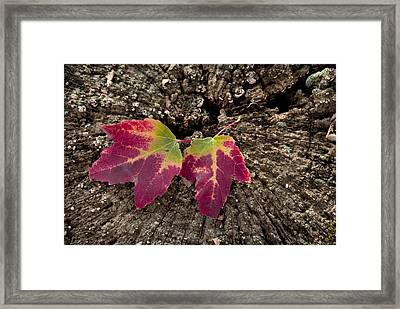 Natures Detail Framed Print by Cindy Rubin