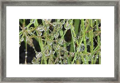 Natures Diamonds Framed Print by Susan Garren