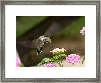 Nature's Dinner Framed Print
