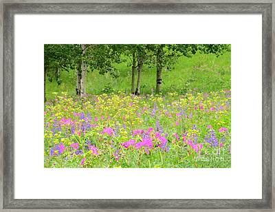 Nature's Display Framed Print by Frank Townsley