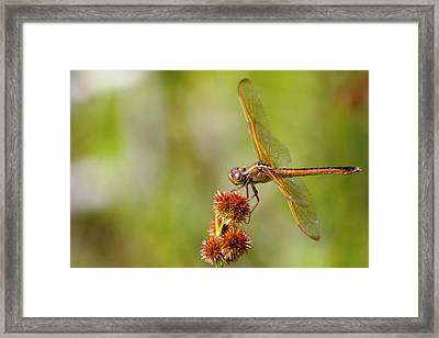 Nature's Dragon Framed Print