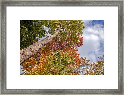 Natures Fall Colors Framed Print by Julie Palencia