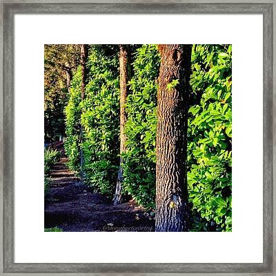 Natures Fence Framed Print