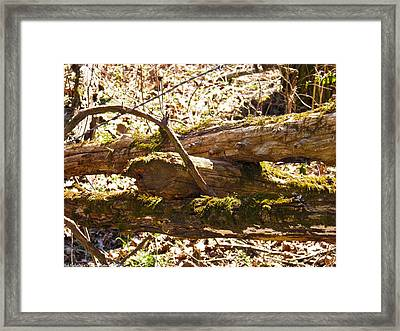 Framed Print featuring the photograph Natures Fence by Nick Kirby
