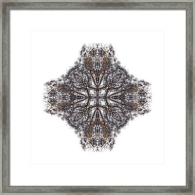 Nature's Filigree Framed Print
