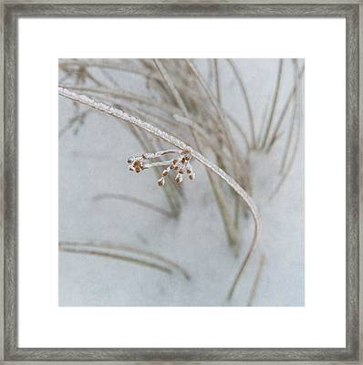 Nature's Fine Jewelry Framed Print by Angie Vogel