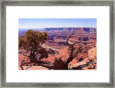 Nature's Frame - Dead Horse Point Framed Print by Bob and Nancy Kendrick