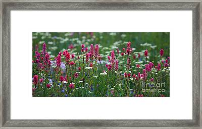 Nature's Front Row Framed Print by Marty Fancy