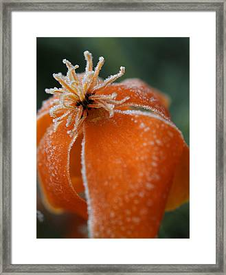 Natures Frost Framed Print by Miguel Winterpacht