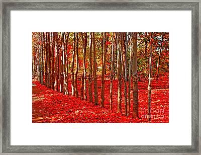 Natures Gifts Framed Print