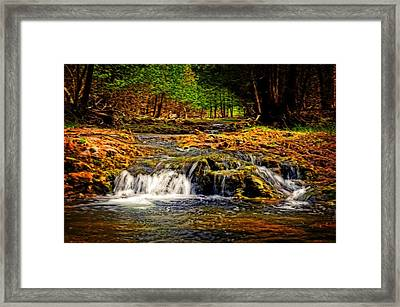 Nature's Glory Framed Print by Cheryl Cencich