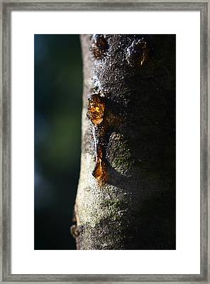 Natures Gold Framed Print