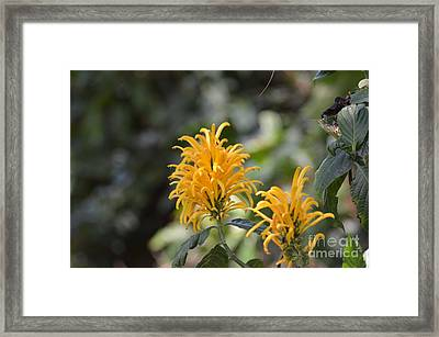 Nature's Golden Fireworks Framed Print