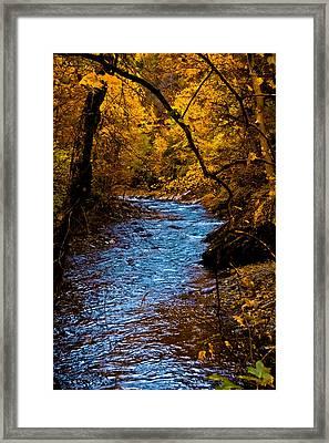 Natures Golden Secret Framed Print