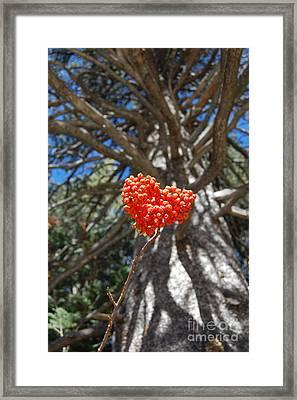Nature's Heart Framed Print by Debra Thompson
