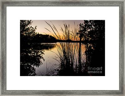 Natures Hidden Beauty Framed Print by Rene Triay Photography