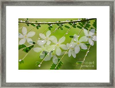 Nature's Jewelry Framed Print