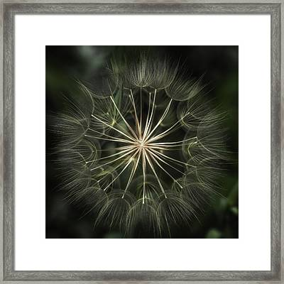 Nature's Kaleidoscope  Framed Print