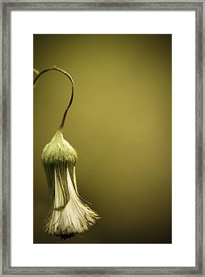 Nature's Little Lamp Framed Print