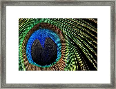 Framed Print featuring the photograph Nature's Loom by Lorenzo Cassina