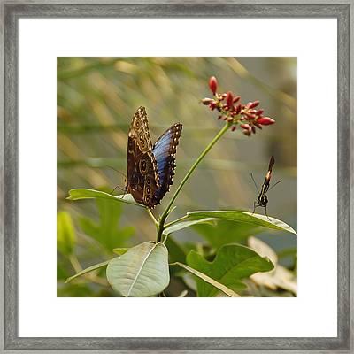 Butterflies On Leaves Framed Print