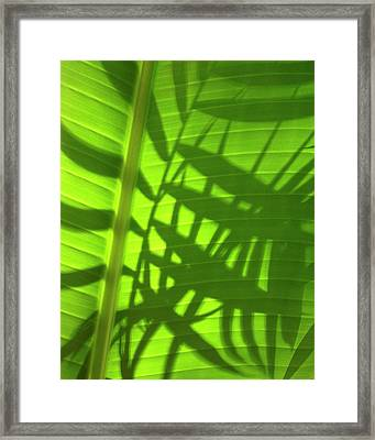 Natures Magic Shadows Of  Palm Fronds Shining Through The Leaf Of A Strelizia Tree Framed Print by PIXELS  XPOSED Ralph A Ledergerber Photography