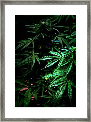 Framed Print featuring the photograph Nature's Medicine by Jeanette C Landstrom