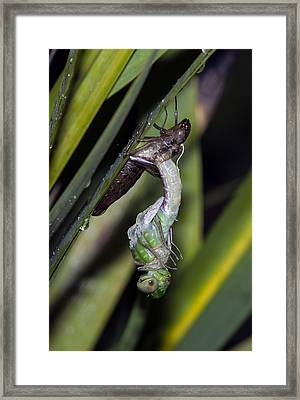 Natures Miracle 2 Framed Print