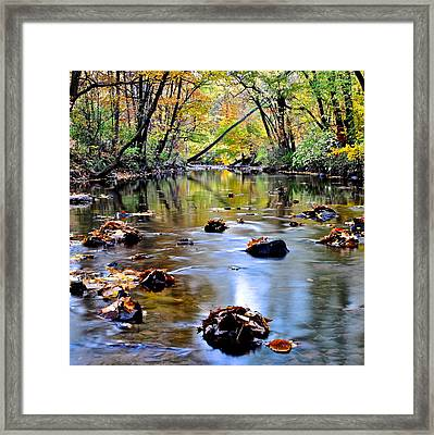 Natures Mood Lighting Framed Print by Frozen in Time Fine Art Photography