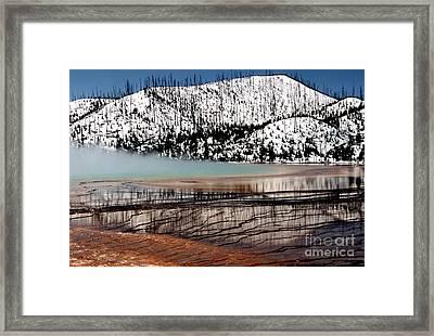 Nature's Mosaic I Framed Print by Sharon Elliott