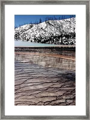 Nature's Mosaic II Framed Print by Sharon Elliott
