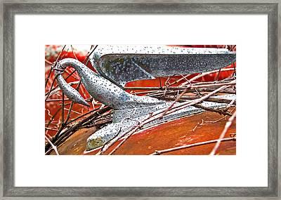 Natures Noose Framed Print