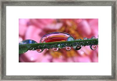 Nature's Ornaments Framed Print