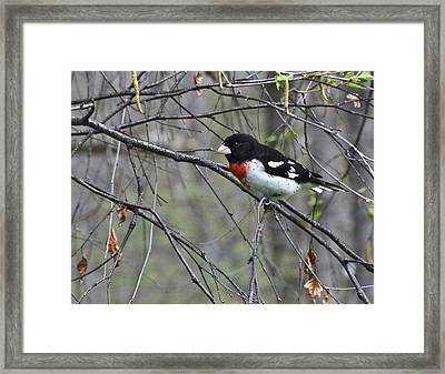 Nature's Paints Wil 173 Framed Print
