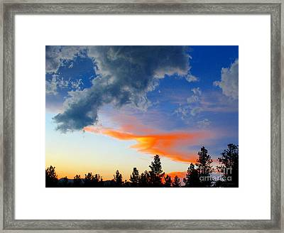 Nature's Palette Framed Print by Barbara Chichester