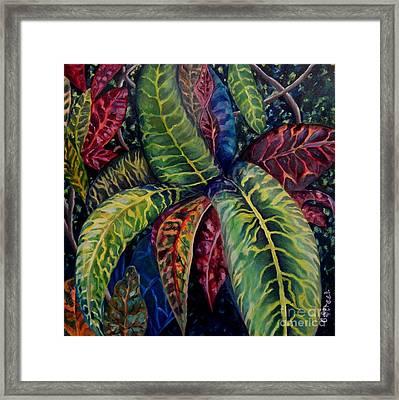Nature's Palette Framed Print by Caroline Street