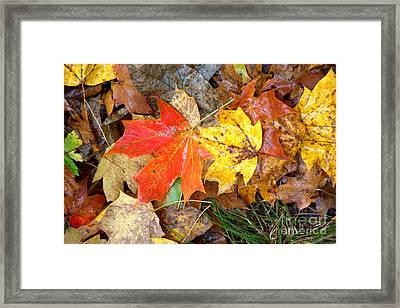 Framed Print featuring the photograph Nature's Palette by Jim McCain