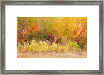 Nature's Palette Framed Print by Paul Miller