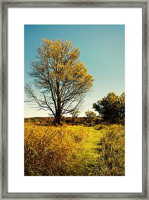 Nature's Pathway Framed Print