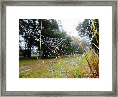 Natures Pearls Framed Print