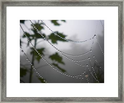 Framed Print featuring the photograph Nature's Pearls by Diannah Lynch
