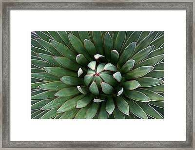 Nature's Perfect Abstract Framed Print